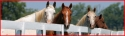 horses_fence2_picture