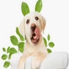 shaklee_dog