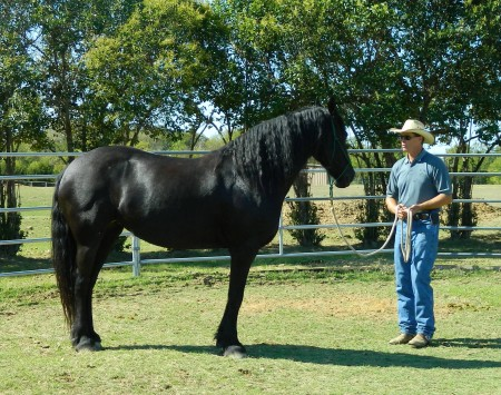 Hsnt equine and livestock adoptions